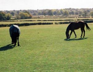 Kent Livery Yard  150 Acres quality grazing